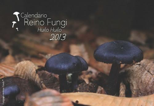 Calendario del reino Fungi  en  la Reserva HuiloHuilo