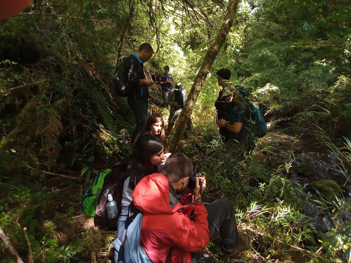 Proyecto Monitoreo del Pudú