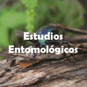Entomológicos