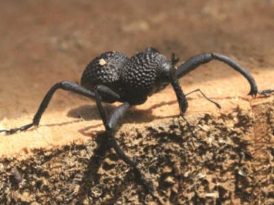 Entomológicos1