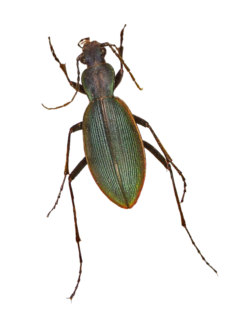 Resultado de imagen para insectos entomológicos