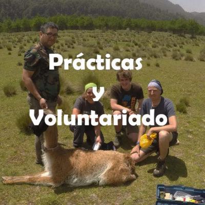 Prácticas y Voluntariado