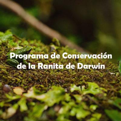 Programa de Conservación Ranita de Darwin