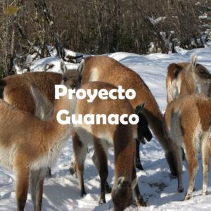 Proyecto Guanaco