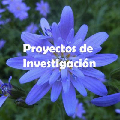 Proyectos de Investifación