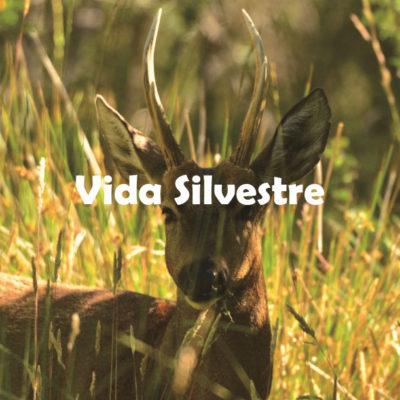 Vida Silvestree