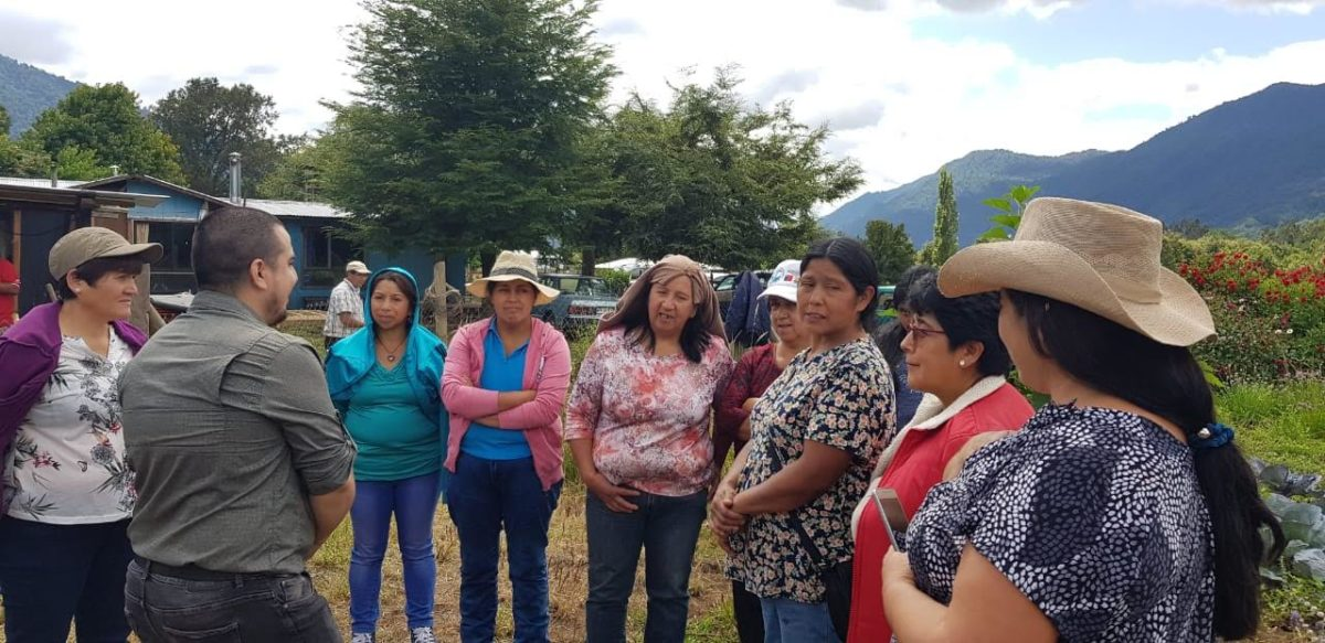 Alianza INDAP, construcción de los invernaderos